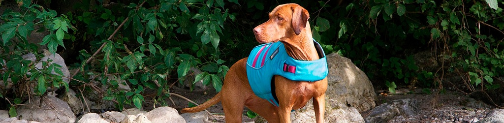 Best Life Jackets (PFD) For Dogs 2019 1