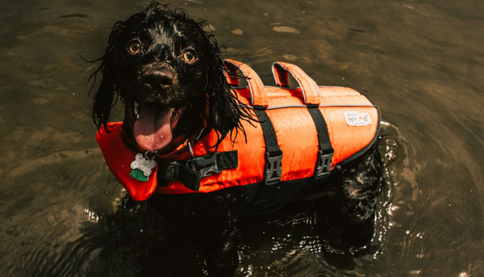 There are life jackets for all sizes of dogs
